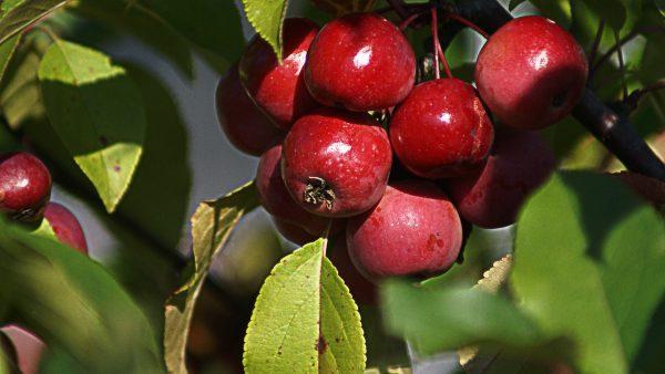 A fruticultura e o seu crescimento comercial no Brasil