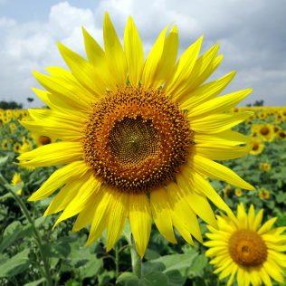 Horticultura e sua importância para a agricultura no Brasil