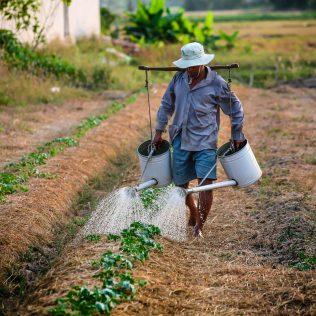 O lavrador e seu papel no crescimento econômico do Brasil