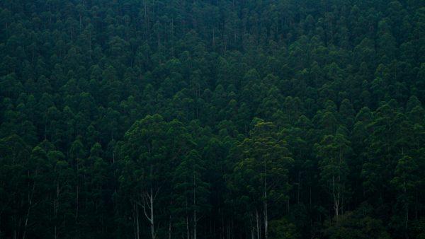 Preservação do meio ambiente pode ser feita com pequenas atitudes