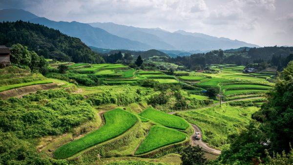 Agricultura de jardinagem garante subsistência de famílias no campo