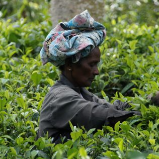 Agricultura extensiva: falta de recursos e baixa produtividade no meio rural
