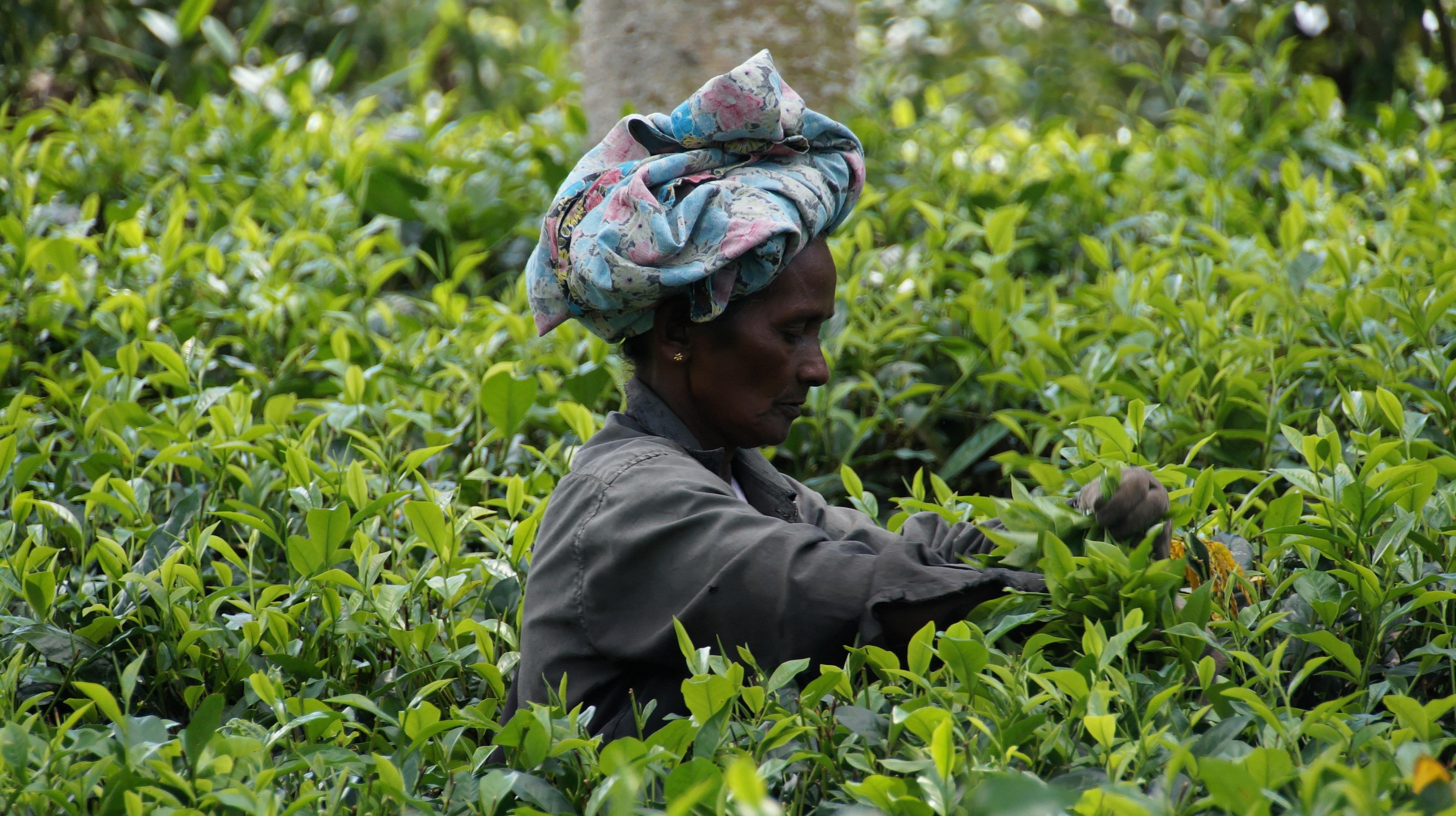 Atividades da agricultura extensiva no meio rural