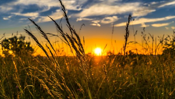 Agro: a importância do setor para o mercado interno e externo do Brasil