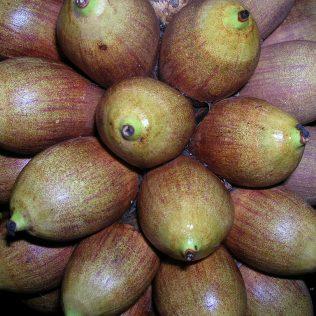 Babaçu é fonte de alimentação, artesanato, cosméticos e até construção