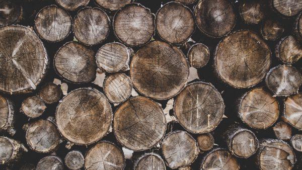 Cepo de madeira: a utilidade deste pedaço específico de árvore
