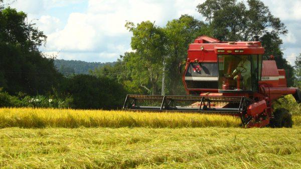 Biocombustíveis e importância deles para o meio ambiente