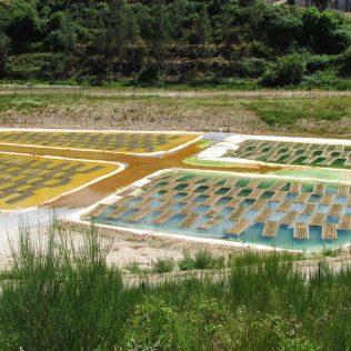 Biorremediação é técnica eficiente para descontaminação do solo