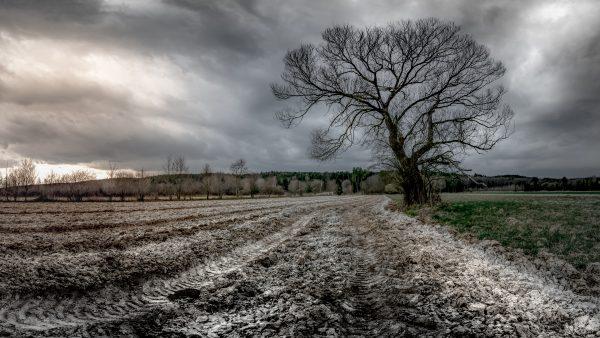 Calagem é técnica agrícola eficiente para manutenção do solo
