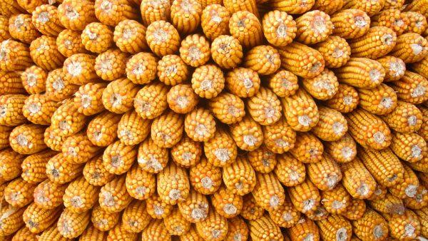 Cereais: Brasil é o terceiro maior país exportador global