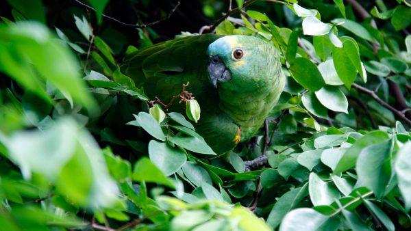 CITES e a sua importância para a manutenção do meio ambiente