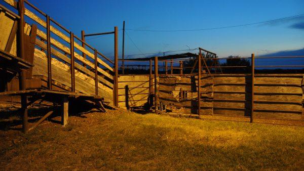 Curral é necessário e importante para a produtividade do gado