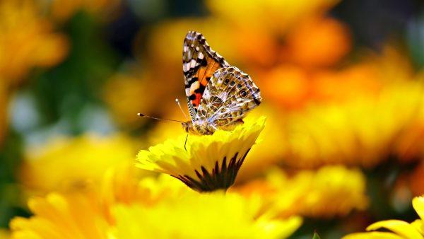 Cada espécie presente na Terra é responsável pelo equilíbrio ambiental