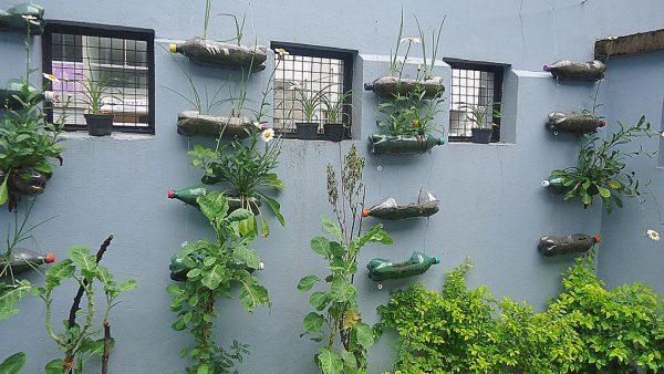 Horta vertical é opção sustentável e barata de cultivo em áreas urbanas