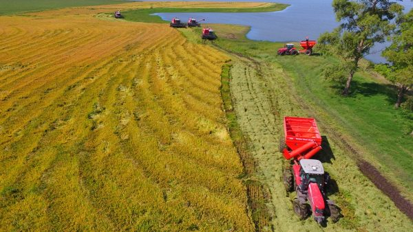 Lavouras, agrobusiness e a representatividade dos setores para o Brasil