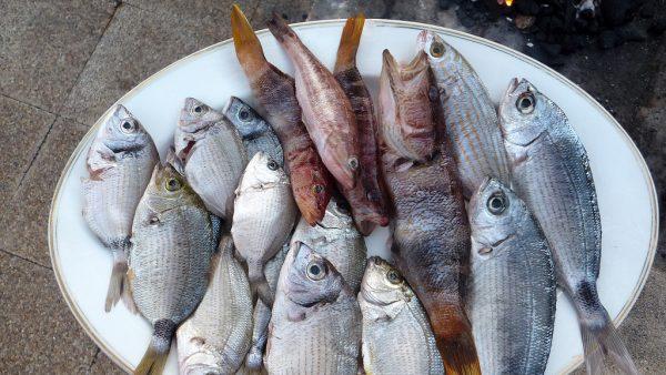 Mercado de pescado movimenta bilhões e alavanca economia brasileira