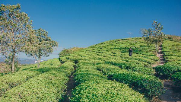 Plantation: as características do sistema agrícola de exploração