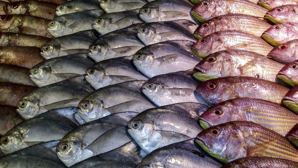 Tipos de peixes: benefícios e importância para a agropecuária brasileira