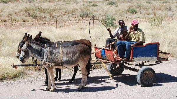 Carroça ainda é meio de transporte comum no campo