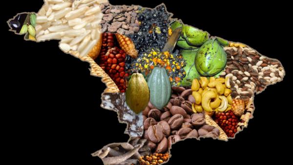 Cotação agrícola é referência para definir os valores praticados no setor