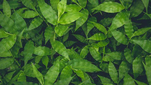Flora e a importância do seu papel no meio ambiente