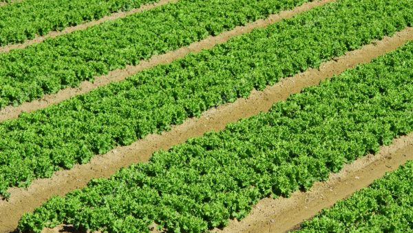 Fronteira agrícola: o que é e como se apresenta no Brasil