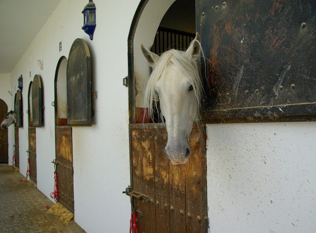 Haras: criação de cavalos