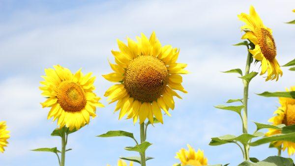 Herbáceas englobam espécies populares em decorações de ambientes