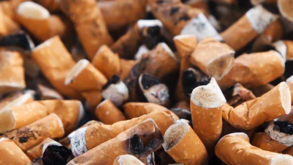 Tabaco é amplamente explorado na agricultura familiar