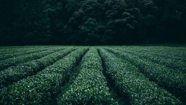 Adubação foliar proporciona cultivos mais saudáveis