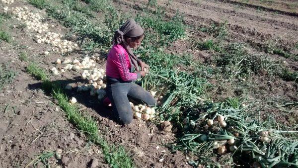 Aposentadoria rural é benefício para o trabalhador do campo