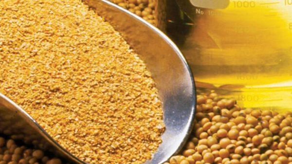 Farelo de soja destaca alto valor energético e proteico
