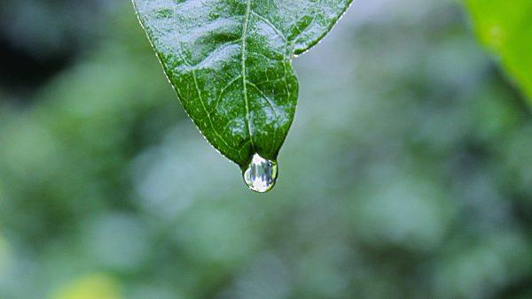 Gotejador é um equipamento que facilita a irrigação das plantas