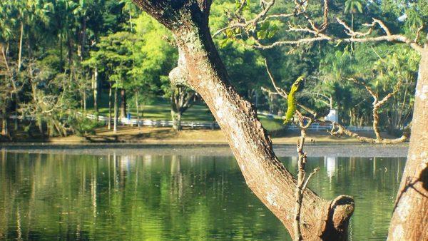 Horto florestal e a importância de sua preservação