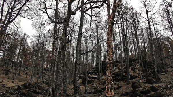 Impacto ambiental e as transformações por trás das ações antrópicas