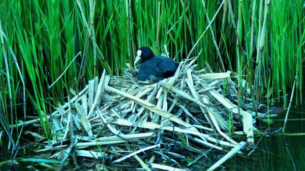 Incubação é o período de desenvolvimento dos animais ovíparos