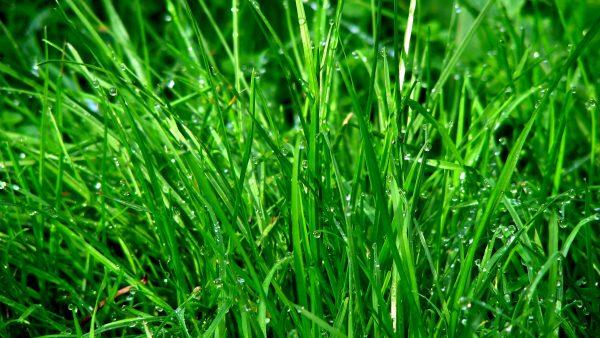 Infiltração é a penetração de água nas camadas mais profundas do solo
