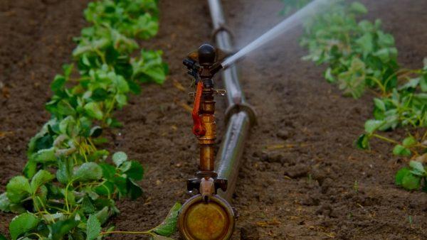 Irrigação destaca diferentes sistemas que auxiliam as atividades agrícolas