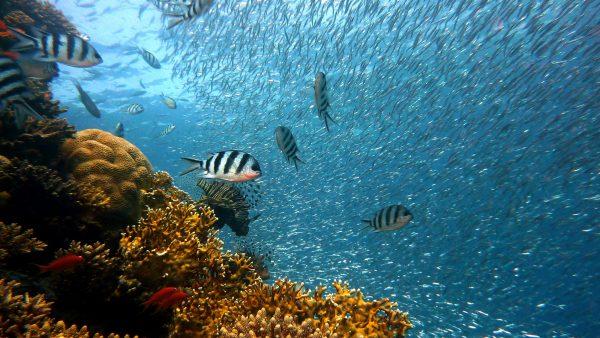 Peixes de água salgada são as espécies que vivem nos mares e oceanos