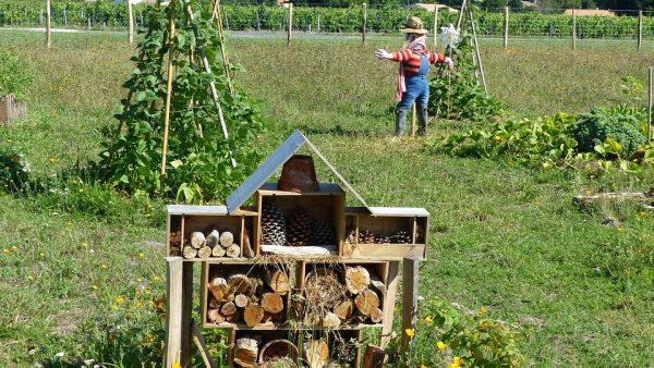 Permacultura propõe o equilíbrio entre a vida humana e a natureza