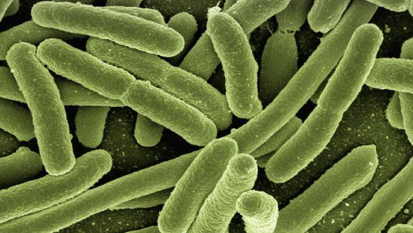 Sistema imunológico é fortalecido pela ingestão de certos alimentos