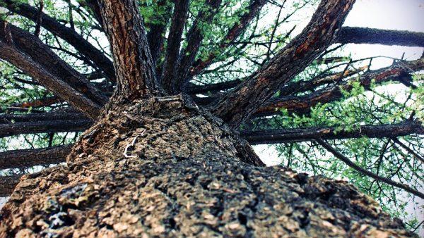 Xilema e a sua importância para a vida das plantas