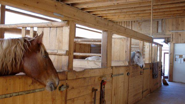 Estábulo é uma construção agrícola para abrigar os animais