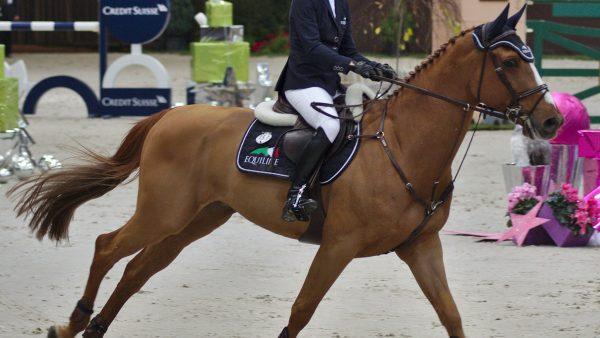 Ginete tem diferentes significados relacionados ao manejo de cavalos