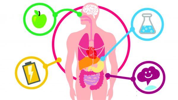 Metabolismo em ordem é fundamental para ter saúde e qualidade de vida