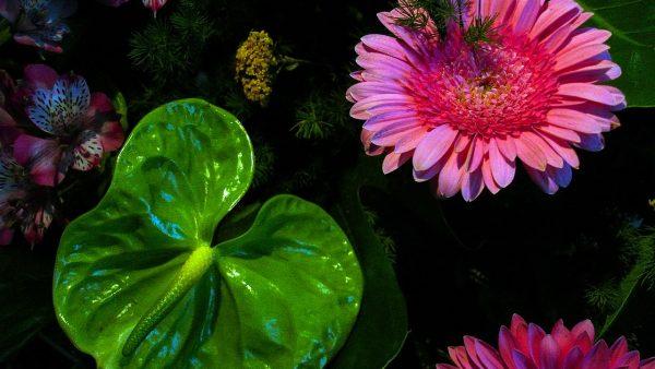 Angiospermas formam o grupo de plantas mais numeroso da natureza