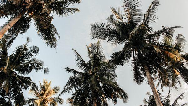 Coco verde é um fruto nutritivo que tem a cara do verão