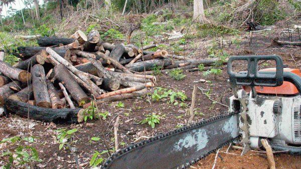Desmatamento gera consequências ao meio ambiente e merece atenção