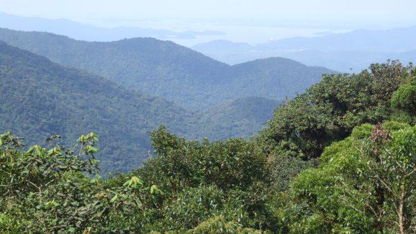 Floresta e as belezas encontradas em cada uma de suas variações