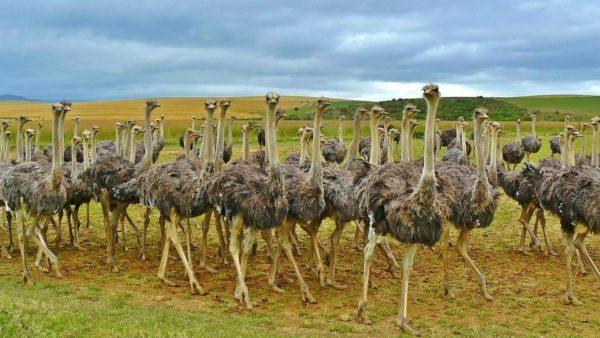 Aves e seus variados tipos movimentam o mercado da agropecuária